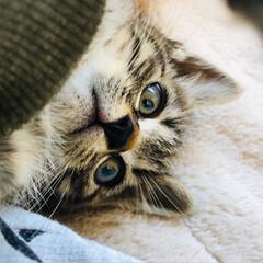 里親/保護猫 バイパス道路でひかれそうになっていた仔猫…(2枚目)