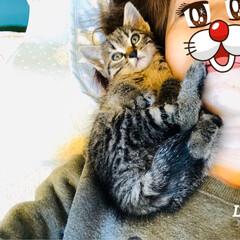 里親/保護猫 バイパス道路でひかれそうになっていた仔猫…(3枚目)