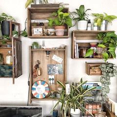 urbanjungle/植物のある暮らし/アップサイクル/木箱リメイク/木箱/インテリア/... 古い木箱や雑貨屋さんで安く購入出来た木箱…