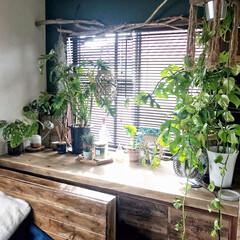 暮らしを楽しむ/植物のある暮らし/流木/インテリア/住まい/出窓インテリア/... 気分に合わせて壁の色やディスプレイを変え…