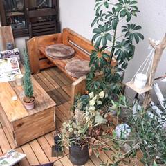 暮らしを楽しむ/植物のある暮らし/インテリア/住まい/アウトサイドリビング/ベッドリメイク/... 壊れたベッドをリメイクしたベンチ&杉の野…