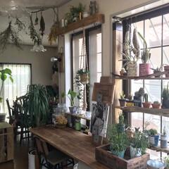 植物のある暮らし/アップサイクル/diyer/流木/2×4材/ラブリコ/... 間取りが古く、どうしてもデッドスペースが…