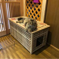 猫トイレ/お洒落な猫トイレ/IKEAの家具で猫トイレ/IKEA/猫と暮らす/保護猫/... IKEAの家具でお洒落猫トイレ♪  本当…