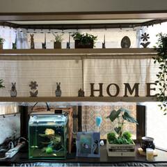 水槽イタズラ防止/水槽/飾り棚/DIY/出窓/ディアウォール/... 出窓にディアウォールで飾り棚を作りました…