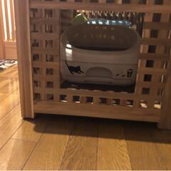 猫トイレ/お洒落な猫トイレ/IKEAの家具で猫トイレ/IKEA/猫と暮らす/保護猫/... IKEAの家具でお洒落猫トイレ♪  本当…(4枚目)