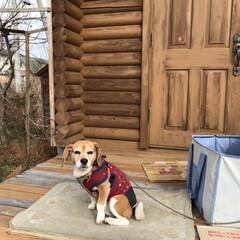 琵琶湖/冬/ペット/犬/風景