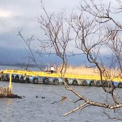 鴨/琵琶湖/冬/おでかけ/風景