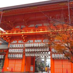 旅行 京都旅行3日目 金閣寺→竜安寺→仁和寺→…(2枚目)