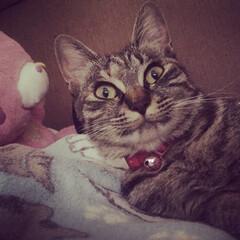 猫派/にゃんこ同好会 寝起きびっくり‼️