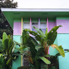 おはようございます/おはよう/ピンク/朝/家/植物/... おはようございます、本日雨です🌴
