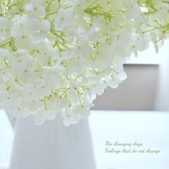 かわいい/可愛い/Flower/シャビーホワイト/シャビー/ナチュラルシャビー/... ・ 待ちに待った 実家の #アナベル が…