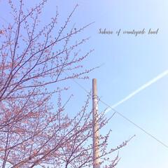 春のおとずれ/春の訪れ/frower/花/空/sky/... * 桜パトロール🌸 * 田舎区と都会区 …(2枚目)