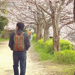 春の訪れ/桜並木/さくら/休日ファッション/休日コーデ/休日/... ・ あなたと桜… *•✿•.¸¸♬ ・ ・