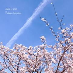 空/sky/season/spring/春のおとずれ/春の訪れ/... * 本日の桜パトロール🌸 満開でございま…