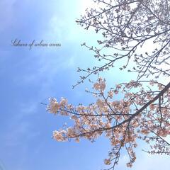 春のおとずれ/春の訪れ/frower/花/空/sky/... * 桜パトロール🌸 * 田舎区と都会区 …