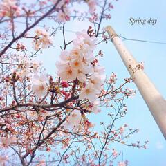 桜パトロール/桜ピンク/pink/SAKURA/春/さくら/... * 今日の桜パトロール🌸 * 昨日より随…