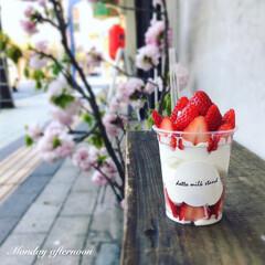 ソフトクリーム/アイスクリーム/アイス/パフェ/sweets/自分へのご褒美/... * Ⴛ̅̀∣ժ̅꒭੭່ごㄜ¨ぃまਭෆ⃛ …