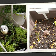多肉植物の寄せ植え/令和の一枚/にゃんこ同好会/至福のひととき セダム,アーモンドネックレスを、…植え替…