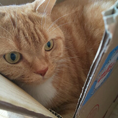 リミ友さんありがとう/リミ友ちゃんからのプレゼント 連投失礼します(_ _*)) 昨日、出か…(2枚目)