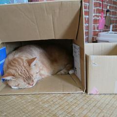 まったり昼寝/癒し/愛猫 大小のHOUSE🏠 行ったり来たり(〃艸…