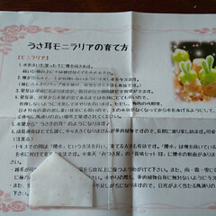 多肉baby/多肉植物がある暮らし ┐(´д`)┌ヤレヤレ5日に発送された物…