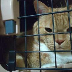 ネコ好き/猫ばか 刑務所に面会に行ってる気分……ママ、僕は…