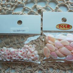 楽天市場/リンゴ貝/桜貝/手作りアクセ 娘への弁当届け……ポスト見たら🤭 次の作…