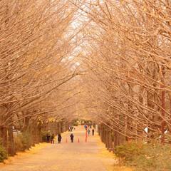 2018/お気に入り 秋の景色立川昭和記念公園でのpic