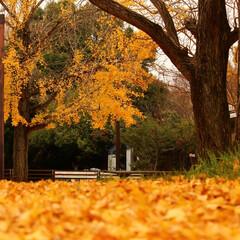 2018/お気に入り 秋の景色立川昭和記念公園でのpic(2枚目)