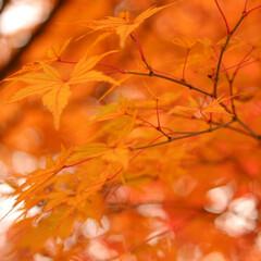 2018/お気に入り 秋の景色立川昭和記念公園でのpic(4枚目)