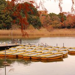 2018/お気に入り 秋の景色立川昭和記念公園でのpic(8枚目)
