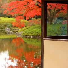 2018/お気に入り 秋の景色立川昭和記念公園でのpic(6枚目)