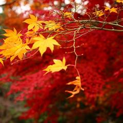 2018/お気に入り 秋の景色立川昭和記念公園でのpic(5枚目)