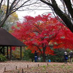 2018/お気に入り 秋の景色立川昭和記念公園でのpic(3枚目)