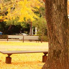 2018/お気に入り 秋の景色立川昭和記念公園でのpic(10枚目)