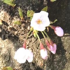春のフォト投稿キャンペーン/春の一枚