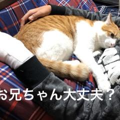 猫 ケガして帰ってきたお兄ちゃんをなぐさめて…(1枚目)