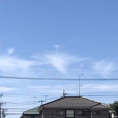 花/雲/空/風景/暮らし 🐶との散歩中  見上げた空に一列に花が咲…