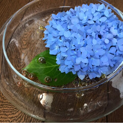 涼/令和元年フォト投稿キャンペーン/雑貨/暮らし 涼を求めて 紫陽花を水に浮かべて 玄関に…