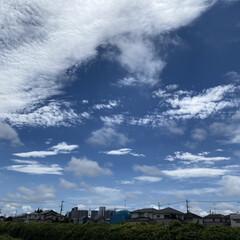「久しぶりの青空 蒼との散歩🚶♀️ 暑い…」(1枚目)