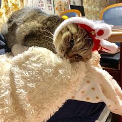 猫/クリスマス/100均/ダイソー こんなの付けられて迷惑なんですけど…