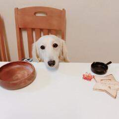 Salyu/ペット/犬/ダイソー/セリア こんばんは😊 ウチの愛犬イヴさんです❣️…(1枚目)