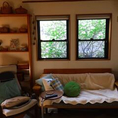 お花見/満開/シンボルツリー/グリーン/インテリア/住まい 2階のリビングの窓から眺める シンボルツ…