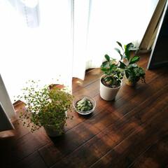 おうち自慢/暮らし/幸せな時間/朝活/のんびり活/植物 のどかなこの朝の時間がとても幸せですね。…