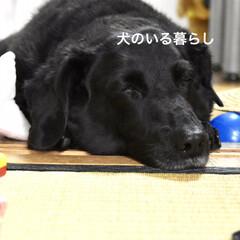 犬がいる生活/犬好きな人と繋がりたい/犬好き/いぬ/LIMIAペット同好会/わんこ同好会/... 犬のいる暮らし  小さい頃から家には、猫…