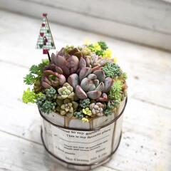 サボテン/多肉植物がある暮らし/多肉植物の寄せ植え/多肉植物/リミアの冬暮らし/DIY/...    おはようございます✨  フォロワー…