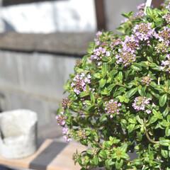 庭づくり/春のフォト投稿キャンペーン/フォロー大歓迎/風景/DIY/インテリア おはようございます🌞  先日お迎えしたタ…