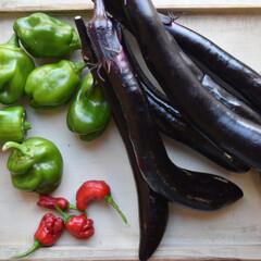 家庭菜園初心者/家庭菜園/雑貨/ハンドメイド/フォロー大歓迎/節約/...  昨日の収穫。。  ナス、ピーマンがほぼ…