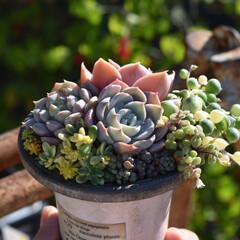 多肉植物/多肉植物がある暮らし/多肉植物の寄せ植え/多肉/ハンドメイド/暮らし/... こんにちは💡  アイデアで小さな多肉植物…