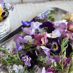ドライフラワー用シリカゲル/ドライフラワーのある暮らし/ドライフラワー/ガーデニング植物/お庭DIY/ガーデニング/... こんにちは💕  朝お花を摘んでドライフラ…